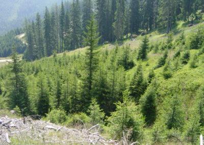 Waldlandschaft 2 , (c) PEFC Austria/Kurt Ramskogler