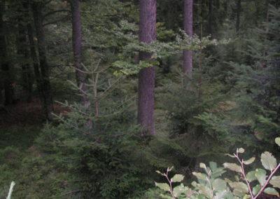Waldlandschaft 9, (c) PEFC Austria/Kurt Ramskogler