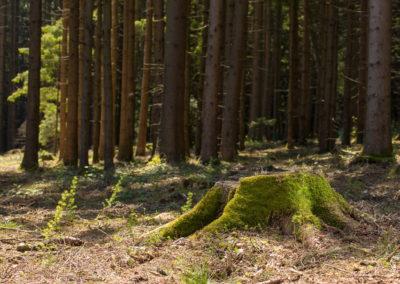 Waldlandschaft 8, (c) PEFC Austria/Kurt Ramskogler