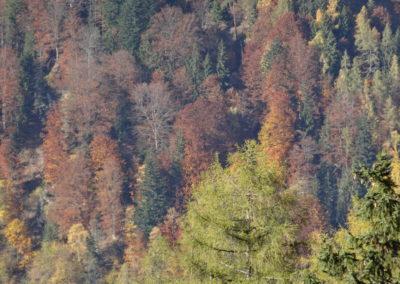 Waldlandschaft herbstlich 2, (c) PEFC Austria/Kurt Ramskogler