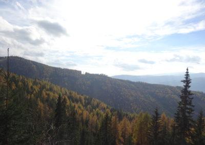 Waldlandschaft 7, (c) PEFC Austria/Kurt Ramskogler