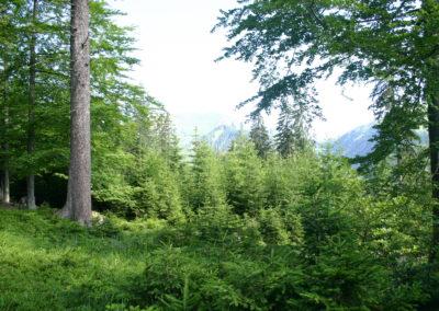 Waldlandschaft 5, (c) PEFC Austria/Kurt Ramskogler