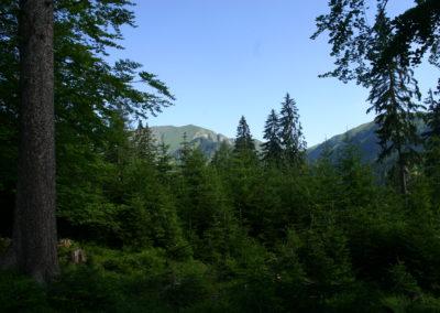 Waldlandschaft 4, (c) PEFC Austria/Kurt Ramskogler