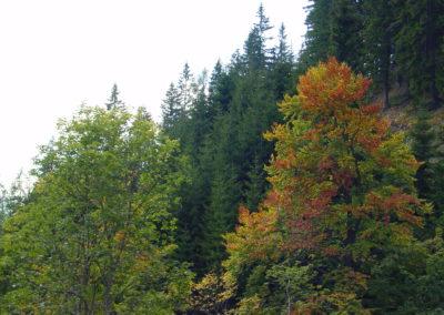 Waldlandschaft herbstlich, (c) PEFC Austria/Kurt Ramskogler