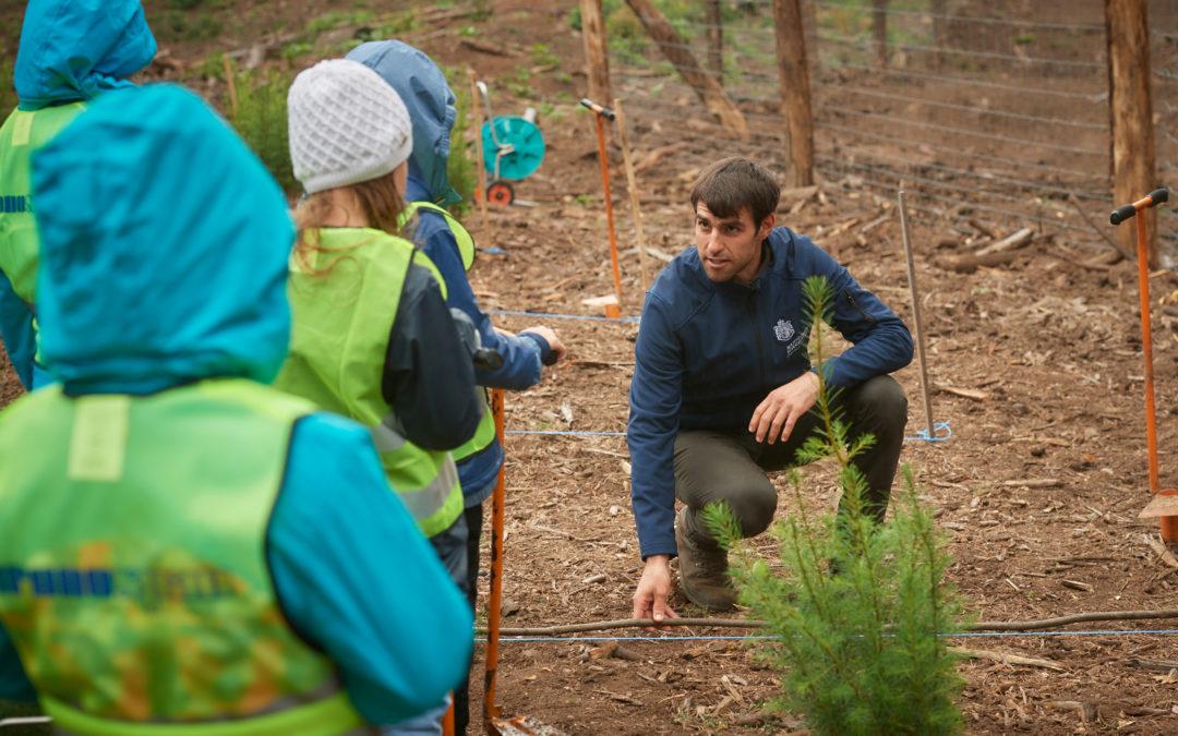 Mit PEFC, BAUHAUS und LOGOCLIC: 110.000 Bäume für den Zukunftswald