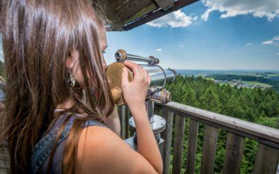 Fokus- und Frischluft-Lieferant Wald