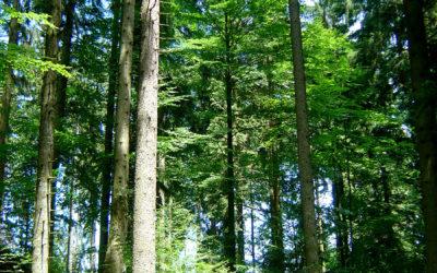 PEFC Austria – Änderungen bei der Waldbesitzerdatenbank und der PEFC-Teilnahmeerklärung